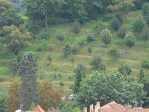 Hintergrund_Wald